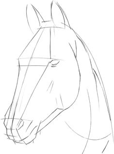how to draw a horse head step by step Horse Head Drawing, Horse Drawings, Pencil Art Drawings, Art Drawings Sketches, Animal Drawings, Simple Horse Drawing, Horse Drawing Tutorial, Horse Sketch, Horse Anatomy