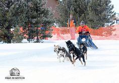 Denver Pet Photographer - Paws in Motion Photography #denverphotographer #coloradopetphotographer #sleddograce #dogsinaction #petphotography #colorado #snow