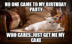 101 Funny Cat Birthday Memes for the Feline Lovers in Your Life Cat Birthday Memes, Happy Birthday Funny, Funny Birthday Cards, Birthday Cats, Birthday Stuff, Birthday Messages, Birthday Quotes, Birthday Wishes, Happy Birthday Crazy Lady