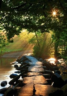 Golden rays of sunlight are just peeking through the gaps formed by rustling leaves on a tranquil morning.