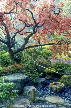 'Deer Scare' under Japanese Maple tree with emerging sp, Japanese garden. 'Deer Scare' under Japanese Maple tree with emerging sp, The Element W