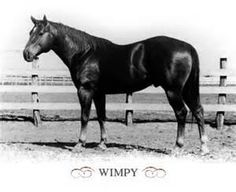 Wimpy was a Stud horse at the King Ranch and was THE foundation stud of the Quarter Horse breed.