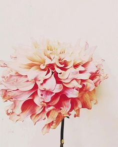 Flowers for Days + Best of the Web