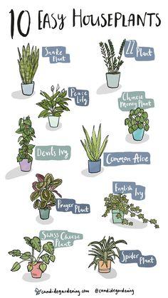 Easy House Plants, House Plants Decor, Garden Plants, Indoor House Plants, Indoor Shade Plants, Easy Care Indoor Plants, Best Indoor Plants, Inside Plants, Room With Plants