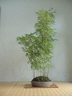 Indoor Bonsai Tree, Indoor Trees, Bonsai Art, Bonsai Plants, Indoor Plants, Garden Terrarium, Bonsai Garden, Zen Garden Design, Moss Garden