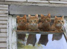We're hungry kitties!!!