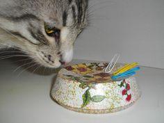 коты питера кошки