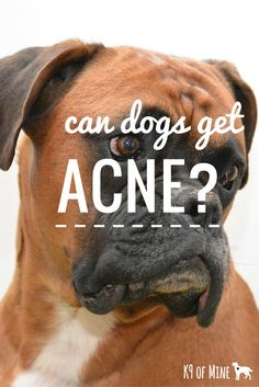 can dogs safely take ativan at bedtime abb