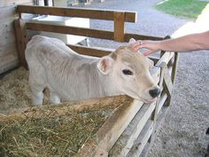 Love the idea of small personal pens for sick calves or babies who need a little extra care.