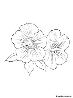 Petunia coloring page for kids | Coloring pages