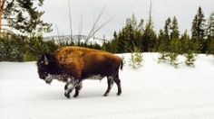 Yellowstone Snowmobile Tour - Jackson Hole WY Central Reservations