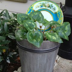 Using a plate as a back drop for a planter