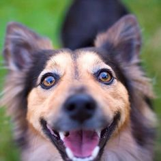 Take A Look At The Happiest Dogs To Help You Get Through Monday!