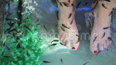 Garra rufa fish natural therapy - fish spa skin treatment.