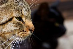Cats. by mindsunniti