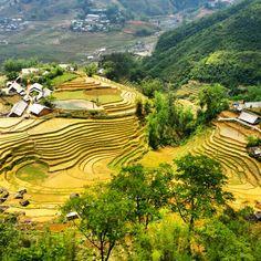 Rice fields in Sapa Vietnam. Insta @sharethespace #sapa #tavan #vietnam #travel #inspiration #sharethespace