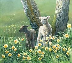 Lambs and Daffodils by Susan D. Bourdet.