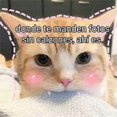 """47 Me gusta, 0 comentarios - Gatos Cool (@gatoscooloficial) en Instagram: """"Relaciones exitosas . . . #memesdegatoscool #gatoscool😸 #gatos_cool #relaciones…"""""""