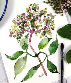 Based on Ohn Mar Wins 'Expressive florals' skillshare class Nature Illustrations, Oil Pastel Art, Watercolor Illustration, Florals, Plant Leaves, Plants, Floral, Flowers, Plant