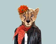 Cheetah---Acinonyx-Jubatus