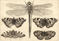 heaveninawildflower:  Dragonfly and four butterflies by  Wenceslaus Hollar (1607–1677)  Artwork from University of Toronto Wenceslaus Hollar Digital Collection via Wikimedia