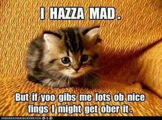I hazza mad. But if yoo gibs me lots ob nice fings I might get ober it.