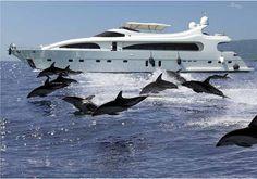 Luxury yacht & Dolphins, caribbean luxury yacht charter