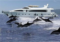 Luxury yacht & Dolphins,caribbean luxury yacht charter