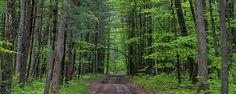 Manistee national forest, michigan by steve gadomski