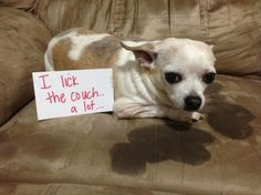 The Funniest Pet Shaming You'll See All Day – 16 Pics