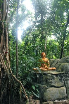 This beautiful forest monastery, temple, learning centre, and orphanage is spread out across 12 acres of sprawling tropical jungle paradise. Buddha Temple, Buddha Buddhism, Sri Lanka Surf, Places To Travel, Places To Visit, Paradise On Earth, Beautiful Forest, Place Of Worship, Island Life