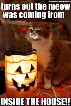 #kittens #pets #cats #funny #animals #pets #halloween #holidays