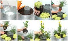 Composición con plantas acuáticas - Decogarden