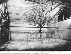 iheartmyart: Katie Holten, Photograph of an excavated Cox's Pippen tree re-erected in a shed in East Malling, Original Photograph (1952) courtes... (Continued)