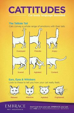 Cattitudes. Cat care tips for figuring out cat tail and face signals for decoding cat language.