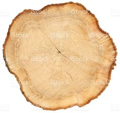 wavy wood tree sliced cross section with tree rings royalty-free stock photo Tree Slices, Roof Ideas, Tree Rings, Wood Tree, House Roof, Royalty Free Stock Photos, Dishes, Photo Illustration, Tablewares