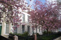 Falkner Square in Spring; Liverpool is famous for its avenues of cherry blossom.