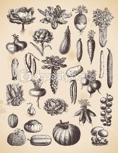 Herunterladen - Satz von Vintage Gemüse — Stockillustration #48982091