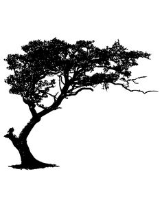 Tree Silhouette Tattoo, African Tree, Wall Decal Sticker, Wall Stickers, Flash Art, Black Labs, Tree Art, Watercolor Art, Images