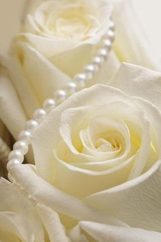 White - Roses with pearls. Blue Roses, White Roses, White Flowers, Exotic Flowers, Pretty Flowers, Pearl And Lace, Shower Centerpieces, Rose Cottage, White Aesthetic