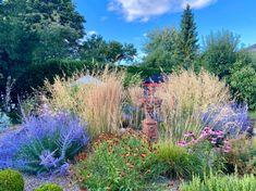 4 GRAMINÉES HAUTES magnifiques au jardin ! 🌾 Miscanthus Sinensis Gracillimus, Design Jardin, Spa, Mountains, Travel, Garden, Terrace Garden, Cottage Gardens, Natural Garden