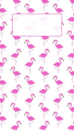 iPhone wallpaper background cute girly pink summer flamingo