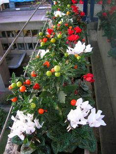 Autumn and winter window box. Winter Window Boxes, Christmas Window Boxes, Christmas Mix, Christmas Ideas, Rooftop Terrace Design, Winter Planter, Wall Boxes, Fall Winter, Autumn