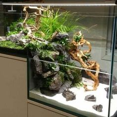 .like the hardscape idea for emerging plants
