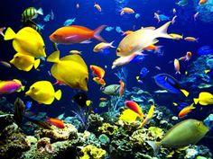 schöne tierbilder bunte Kreaturen im Ozean