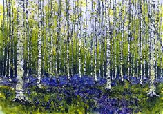 Bluebells and silver birch trees