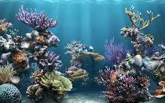 Resultado de imagen para fondo marino wallpaper