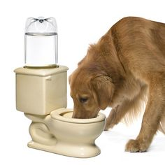 The throne. The john. The loo. The commode. However you refer to the toilet, we don't think you've ever called it the water bowl—but your pet probably does. In what could only be called a burst of brilliant inspiration, this hilarious dog and cat bowl is designed to give your four-legged bud her very own thirst-quenching commode.