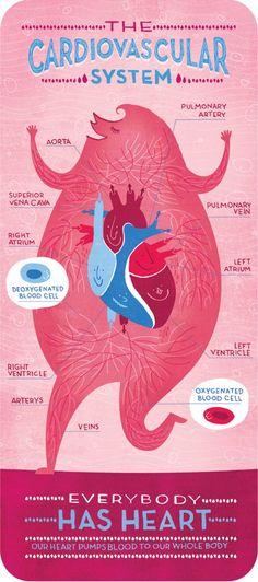 The Cardiovascular System - Rachel Ignotofsky