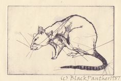 copper engraving - rat by ~YamiPanther on deviantART